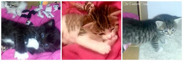 Kittens-Collage-4-weeks.jpg.jpg