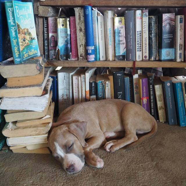 Two of my favourite things dogs and books A scenehellip