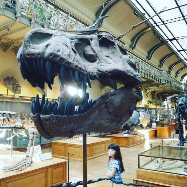 Hanging out with TRex at the palaeontology exhibition at thehellip