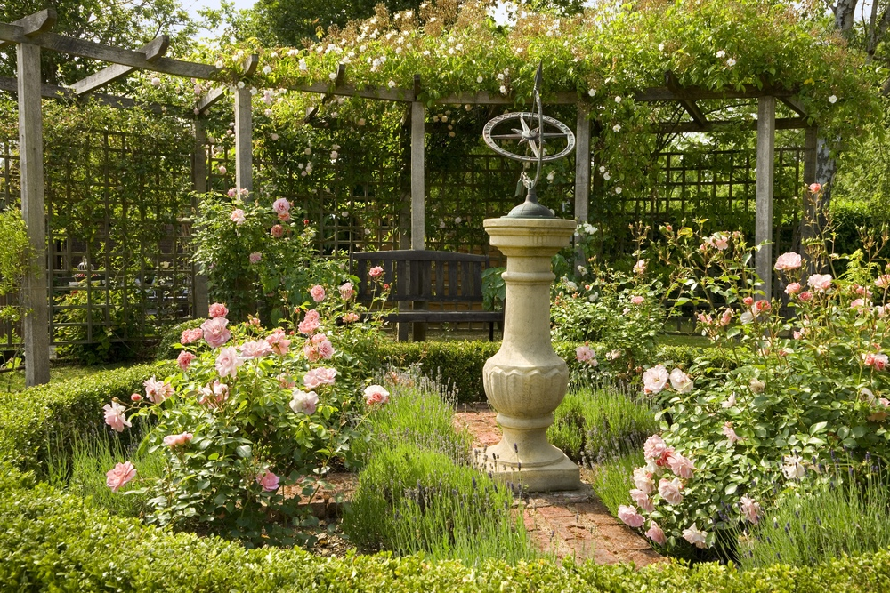 How To Grow Roses The English Garden