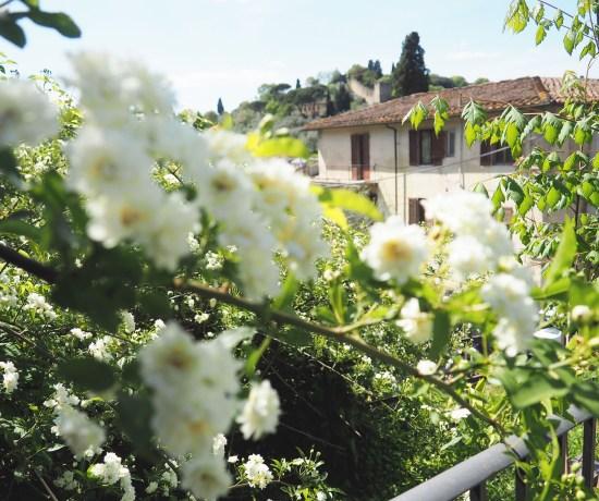 Rose Garden In Florence