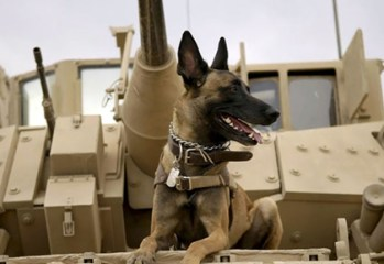 "Traumatized by his handler's death in Afghanistan, a Belgian Malinois military working dog is adopted by the fallen Marine's family in ""Max,"" a 2015 MGM / Warner Brothers family film directed by Boaz Yakin."