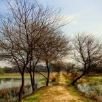 On Things Lost and Found: Sultanpur National Park – Gurgaon, India