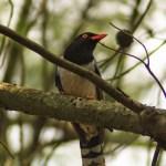 Scouting Report – Ba Vi, Vietnam – Birds and Butterflies