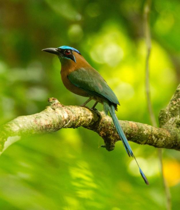 Birding Ka'Kau Jungle Cabinas – Costa Rica, Late April 2016