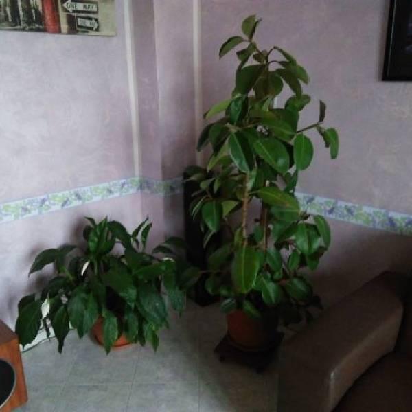 lenovo-k5-piante