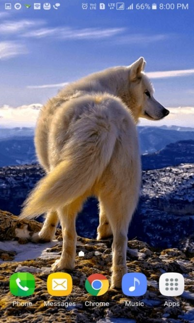 Mountain Wolf Live Wallpaper