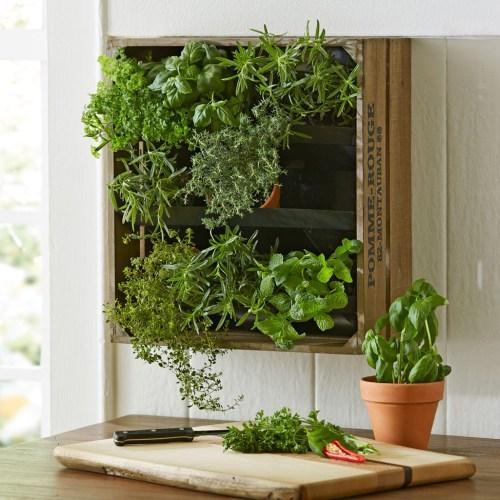 Medium Crop Of Vertical Wall Herb Garden