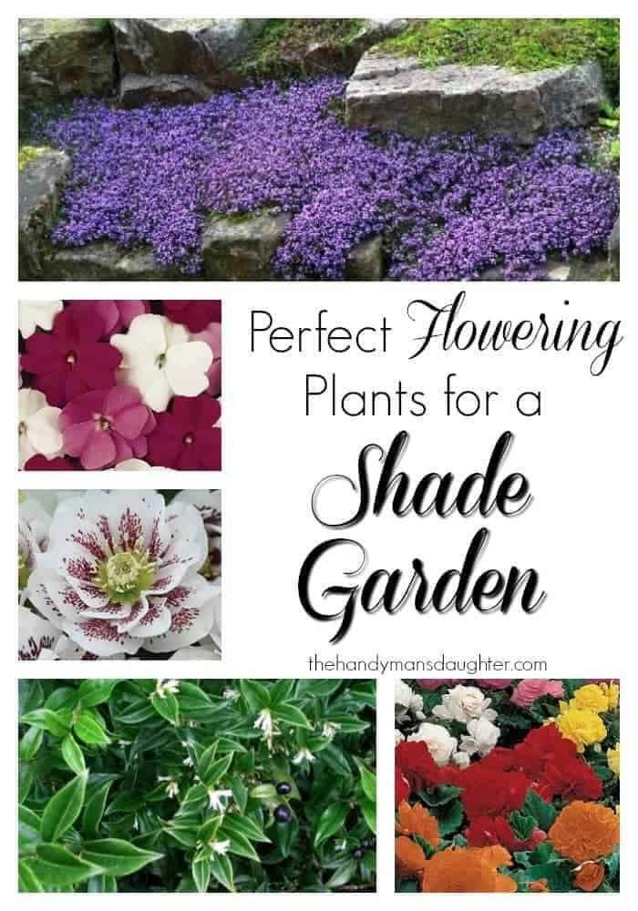 Perfect Flowering Plants for a Shade Garden