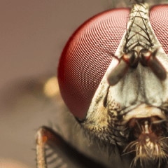 5 Best Ways for Getting Rid of Flies