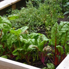 Growing Your Own Vegetables Is Easier Than You Think