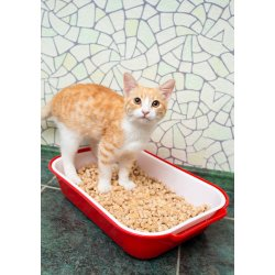 Small Crop Of Coconut Cat Litter