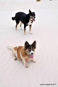My photogenic dogs