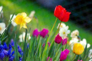 440px-Colorful_spring_garden