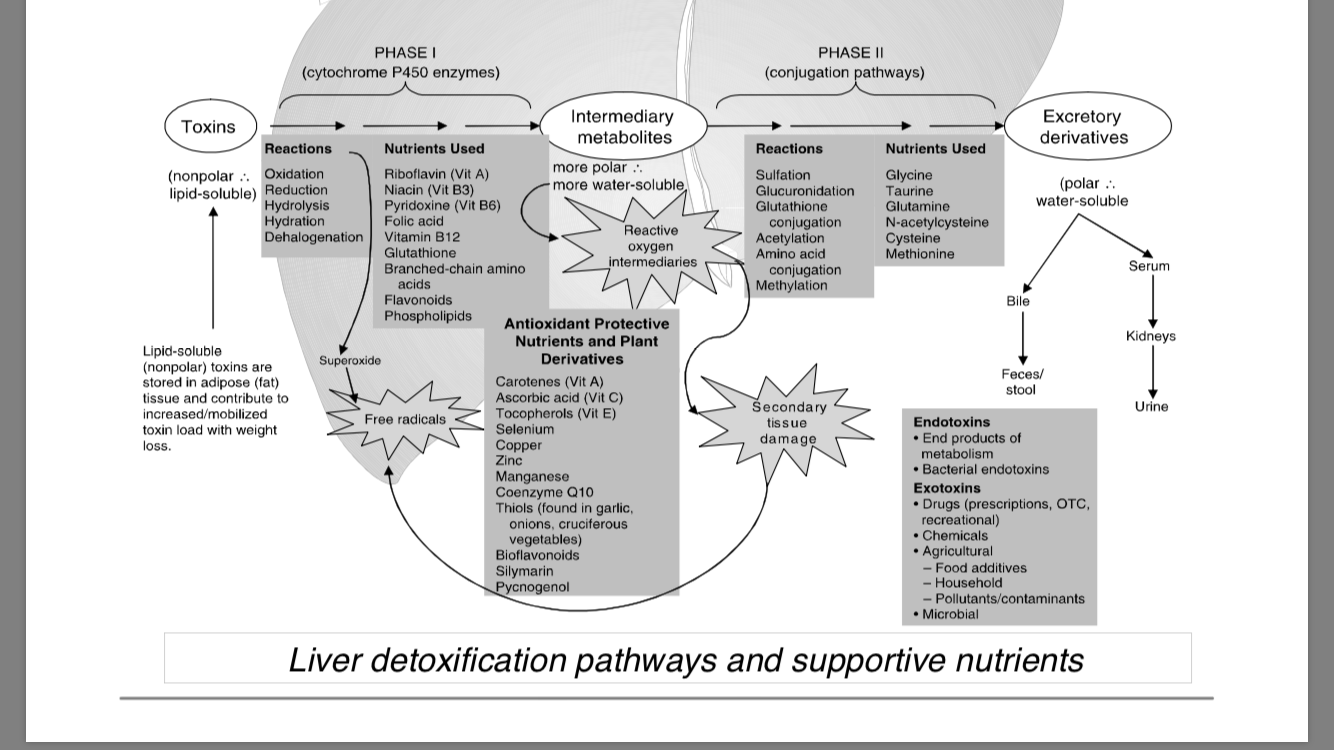 Liver Detox Pathways