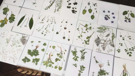 Herbier * // May 2016 // Hot off the press // Herb Garden at The Marksman prep