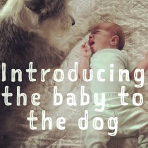 Introducing the Baby to the Dog: the realistic tips