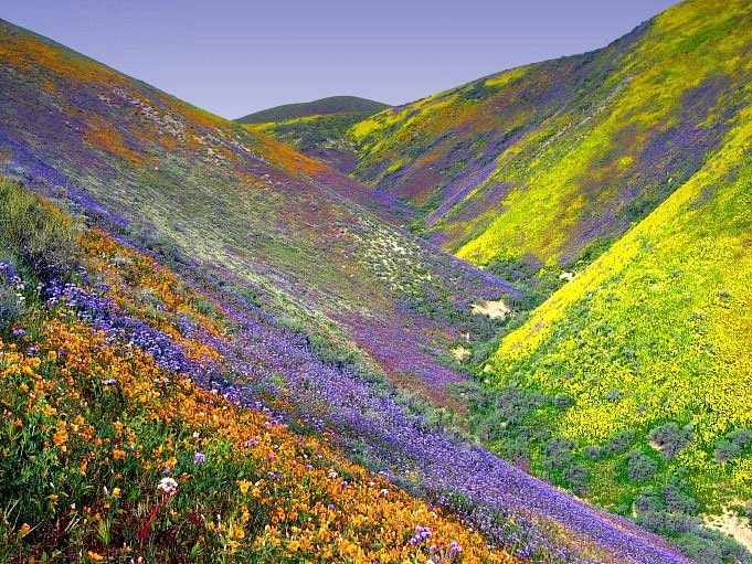 Image result for Valley of Flowers National Park