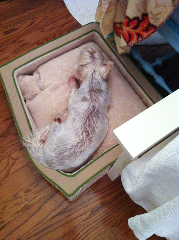 Testing out Bode's new bed for him, October 01, 2012