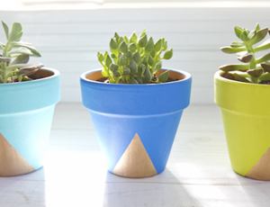 geometric brights + gold succulent pots