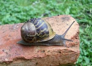 TKP-escargot