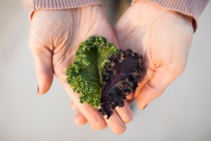 The Kale Project_Dark Rye