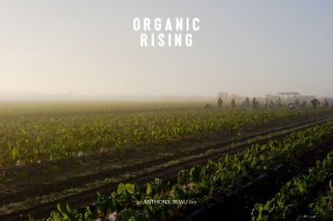 The Kale Project-Organic Rising