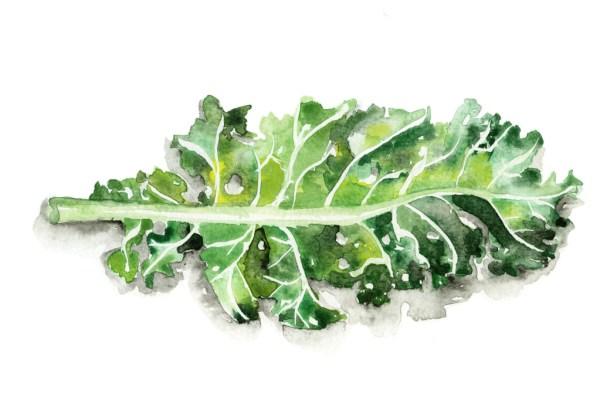 Jessie Kanelos Weiner-kale leaf-thekaleproject