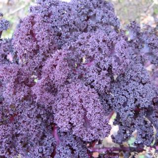 jl-ch-frise-violet