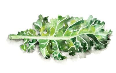 Jessie Kanelos Weiner-kale leaf-thekaleproject (1)