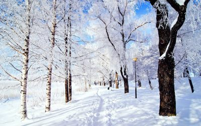 10 Snow Facts to Make You Feel Festive | The List Love