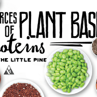 Plant Based Protein Sources