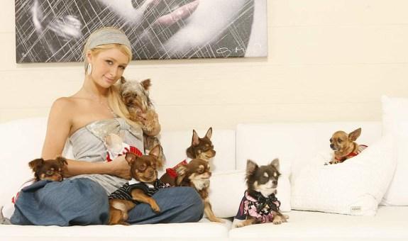 Las mascotas de Paris Hilton