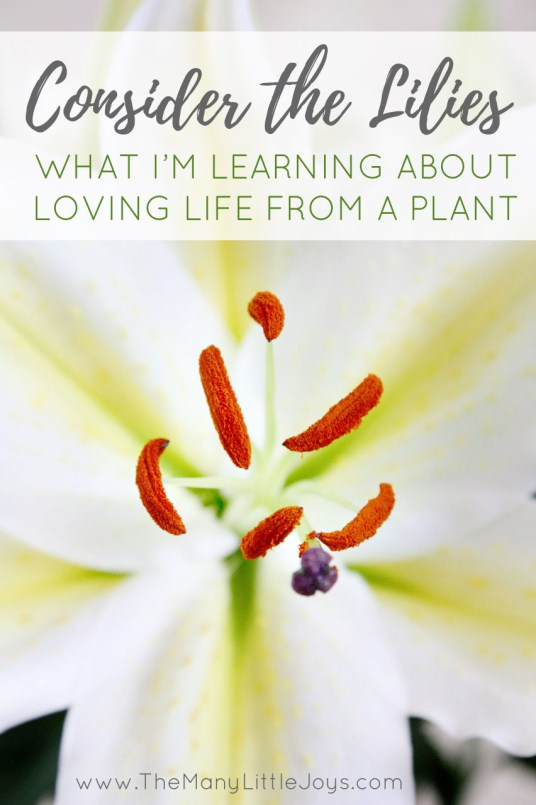 Sometimes, important realizations come from simple life experiences. Here's what I learned from a plant about seeking out the sunshine in life.