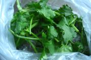A nice-looking, but rather wimpy bunch of cilantro from a mercado in Col. Cuauhtemoc, Mexico City