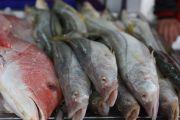 Fish at the La Viga seafood market in Mexico City
