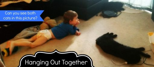 Hanging out together cats vs toddlers
