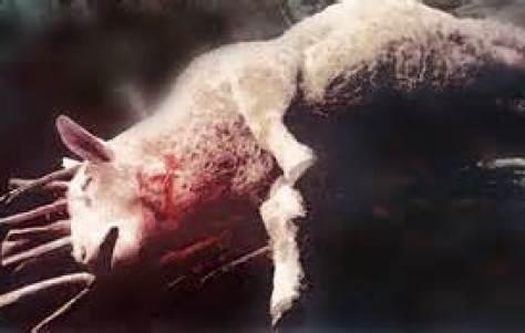 The Lamb Slain