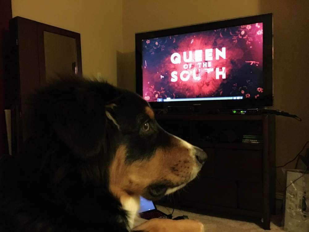 Queen of the South - The Nueva Latina