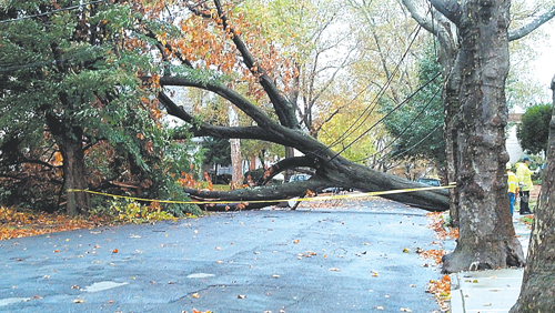 Photo by Photo by Natalie Rodriguez-UlloaMassive tree on Oakwood Ave. in Kearny was one of Hurricane Sandy's casualties.