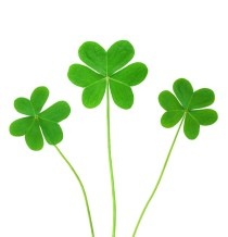 shamrocks_web