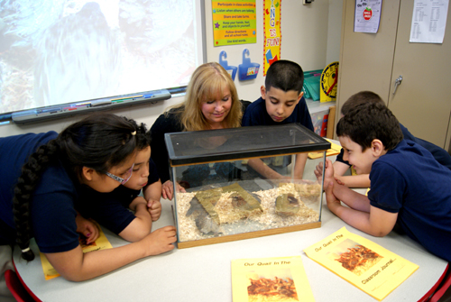 Photo by Karen Zautyk Washington School teacher Marie Altobelli and her second-graders are having a quail of a time caring for 32 Bobwhite hatchlings