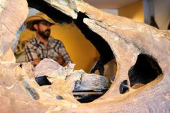 Matt Mossbrucker, curator of Morrison Museum of Natural History
