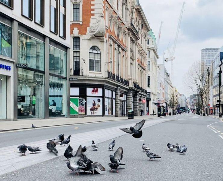 Oxford Street belongs to the Pigeons - London during Lockdown