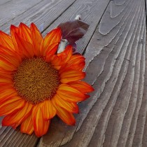 5 Fall Flowers that are Not Mums