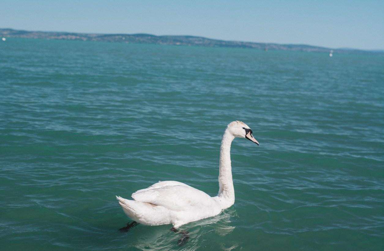 Mala Garden Lake Balaton (11 of 23)