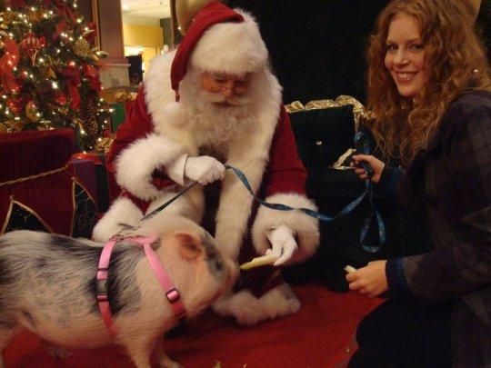 Rachel Woodhouse, Cupcake, and Santa