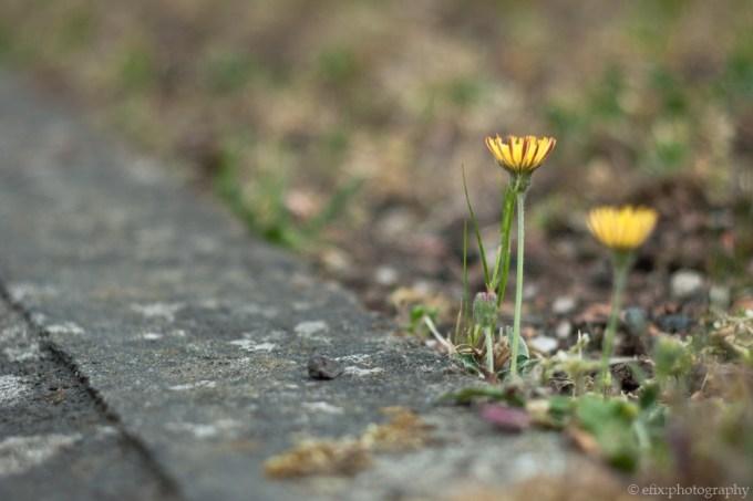 litte_flowers