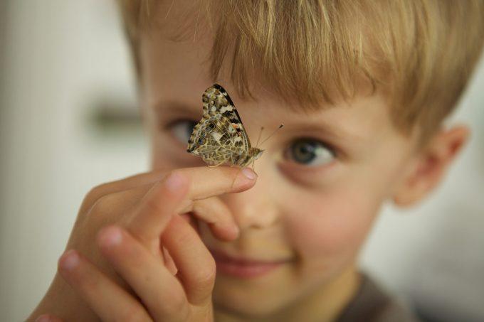 Boy with butterfly: mel@friedbaer.de (Mel)