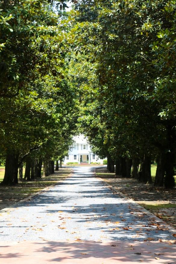 Driveway in Pinehurst
